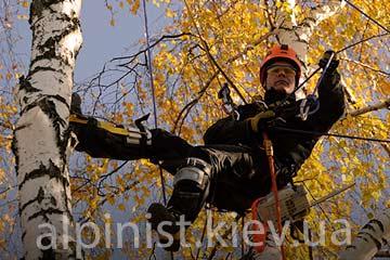 обрезка деревьев альпинист киев