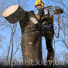 обрезка деревьев киев фото категории