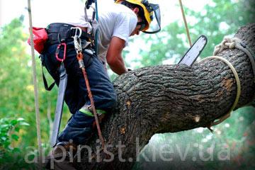 пример работы обрезка деревьев альпинистами фото