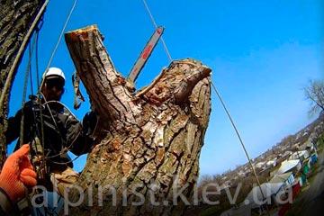 пример работы спил дерева целиком альпинистами фото