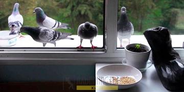 Защита от птиц помощь альпинистов фото категории новости
